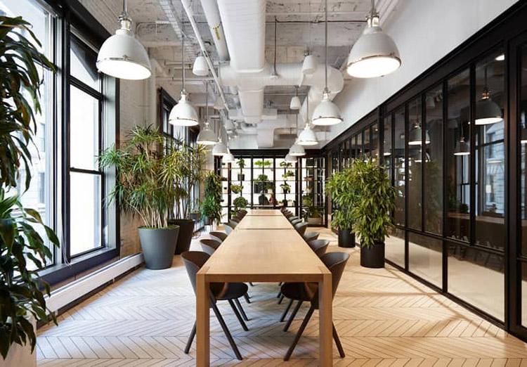 thiết kế văn phòng theo kiểu biophilic